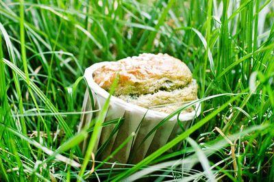 Muffins aux herbes fraîches